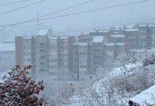 Bor pod snegom
