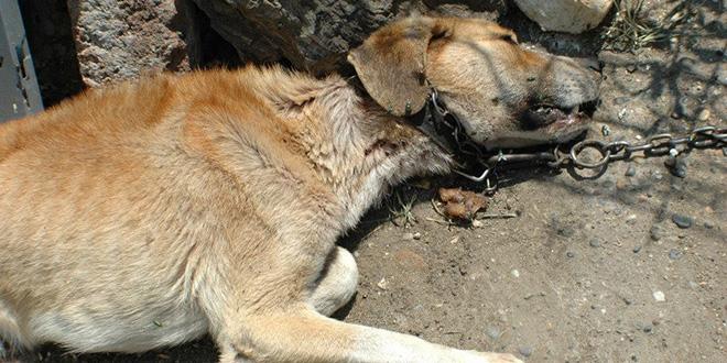 """Foto: Udruženje za zaštitu životina """"beban"""""""