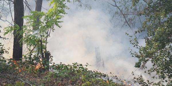 Opalo lišće bagremove šume prave gust dim