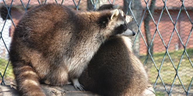 rakuni-zoo-vrt